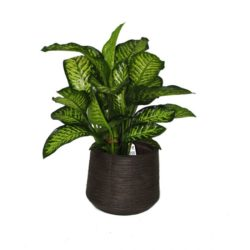 plants supplier in dubai