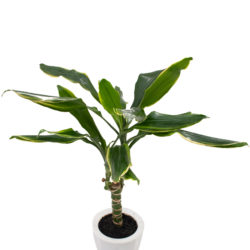 buy plants in dubai